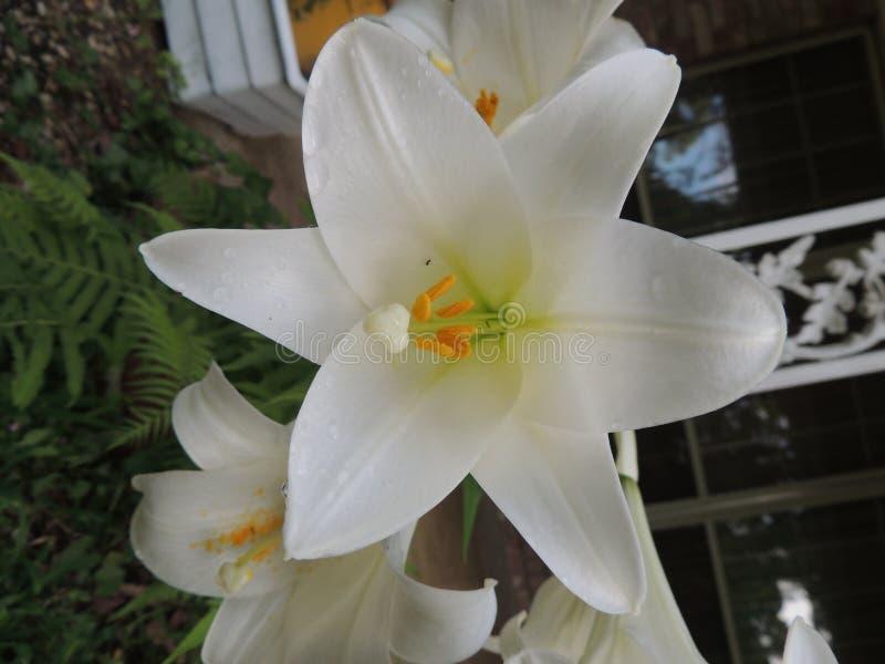 Fleur blanche dans l'automne photographie stock
