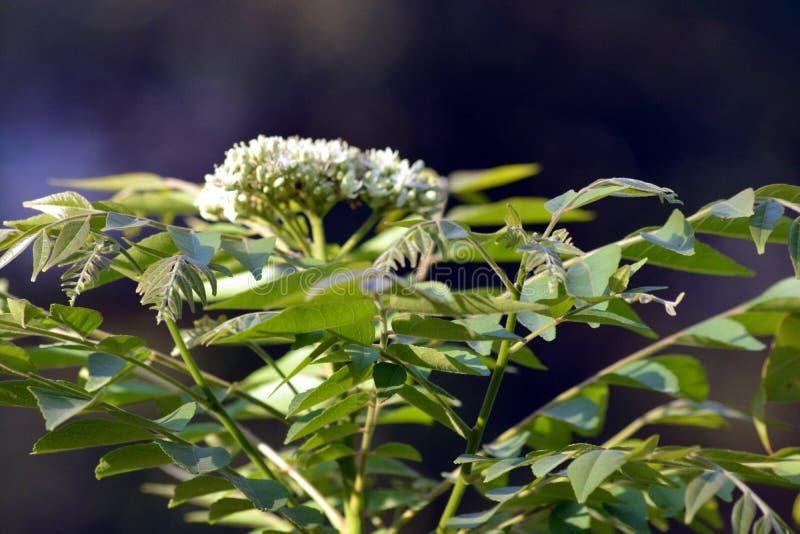 Fleur blanche de couleur avec l'usine photo libre de droits