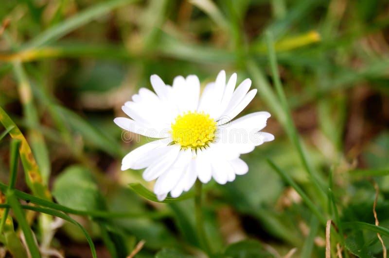 Fleur blanche de jardin botanique images stock