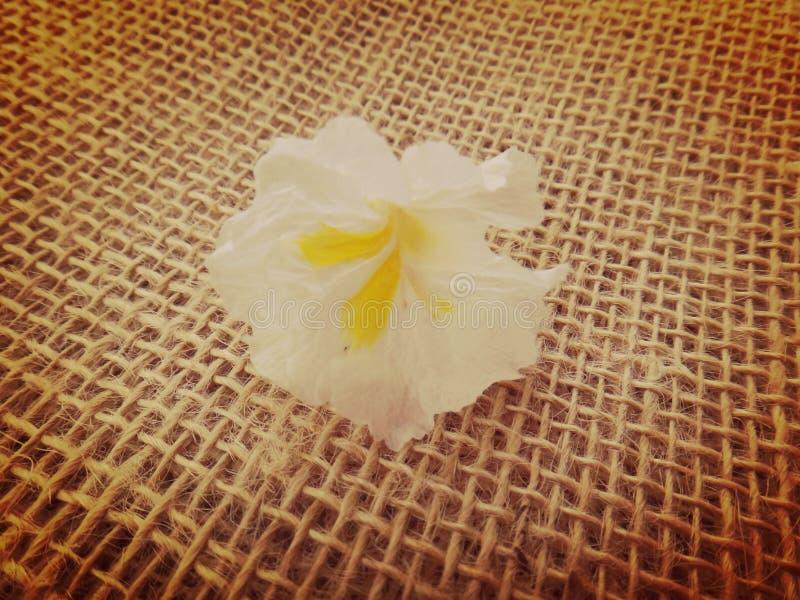 Fleur blanche de tenue de protection individuelle photographie stock