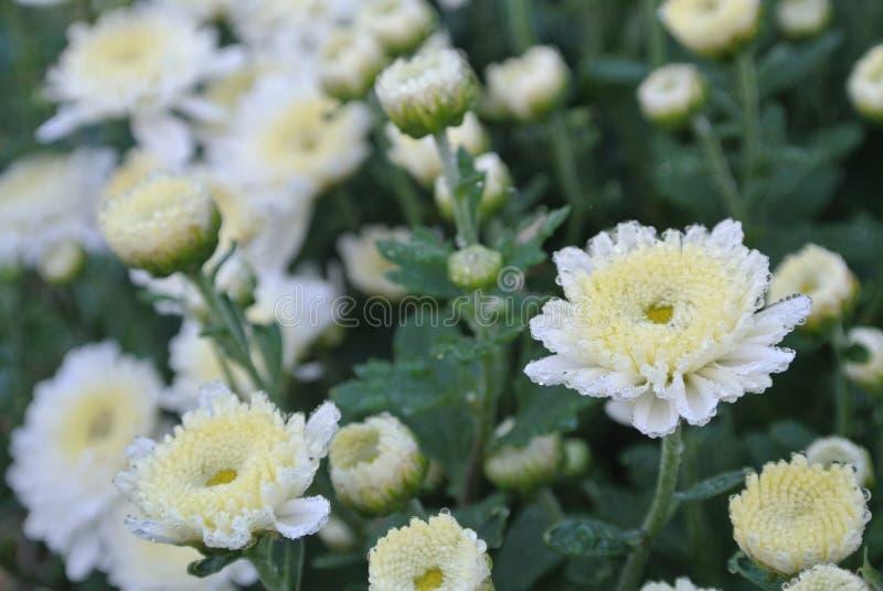 Fleur blanche et instantanée image stock