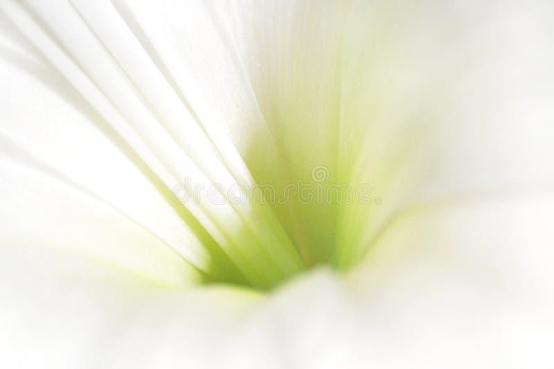 Fleur blanche et verte photographie stock libre de droits
