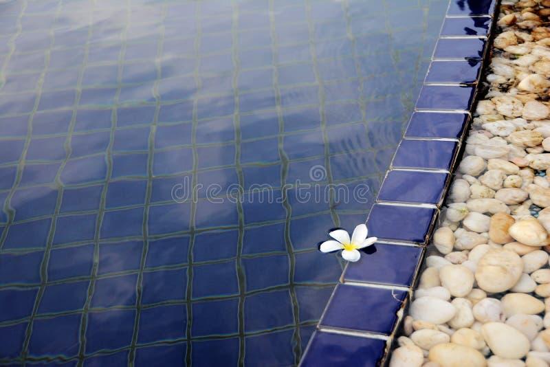 Fleur blanche flottant dans la piscine images stock