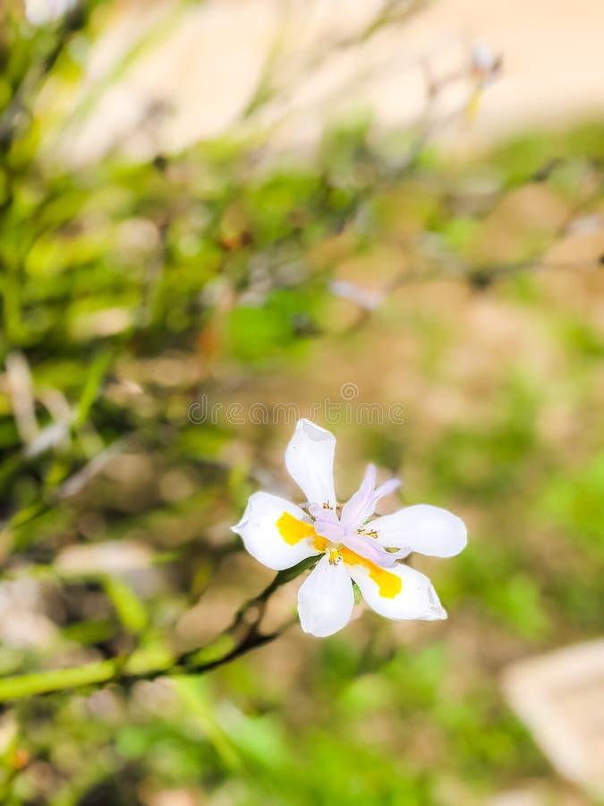 Fleur blanche simple avec le fond brouillé images stock