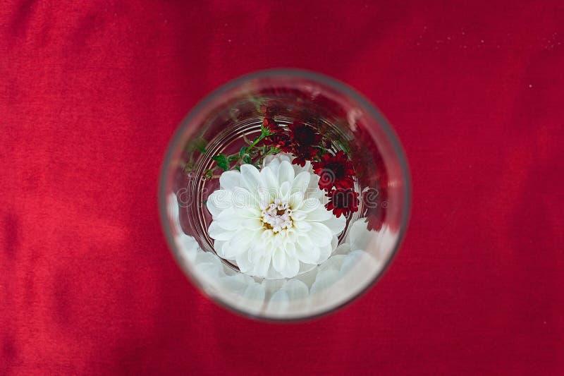 Fleur blanche sous une forme en verre ronde sur un fond rouge photographie stock libre de droits