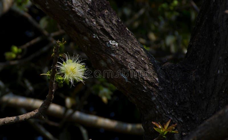 Fleur blanche sur un arbre photos stock