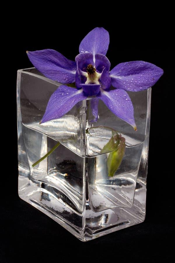 Fleur bleue dans le vase photographie stock
