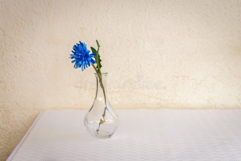 Fleur bleue dans le vase en verre sur la table blanche contre le mur jaun?tre ?g? photos libres de droits
