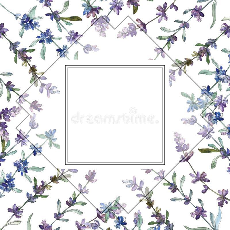 Fleur botanique florale de lavande pourpre Ensemble d'illustration de fond d'aquarelle Place d'ornement de frontière de vue illustration stock