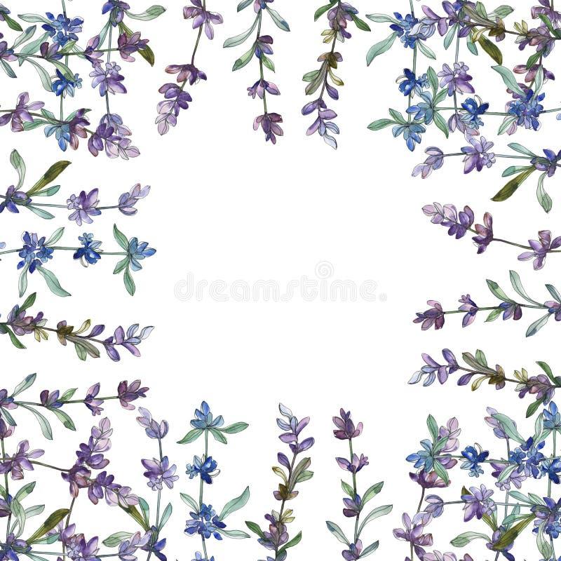 Fleur botanique florale de lavande pourpre Ensemble d'illustration de fond d'aquarelle Place d'ornement de fronti?re de vue photo stock