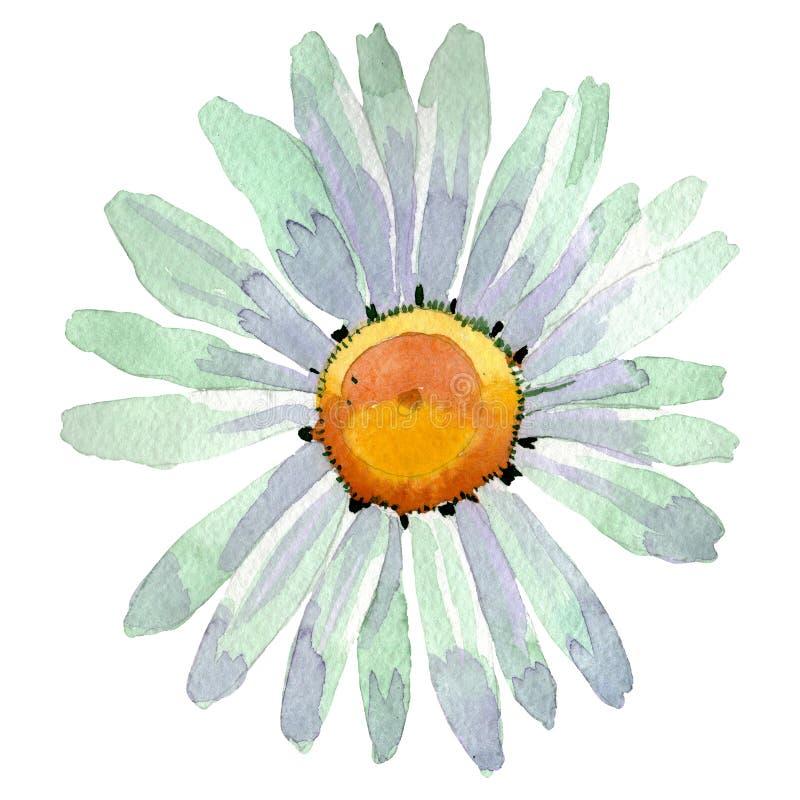 Fleur botanique florale de marguerite blanche Ensemble d'illustration de fond d'aquarelle Élément d'isolement d'illustration de m illustration libre de droits