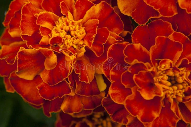 Fleur brillante photo libre de droits