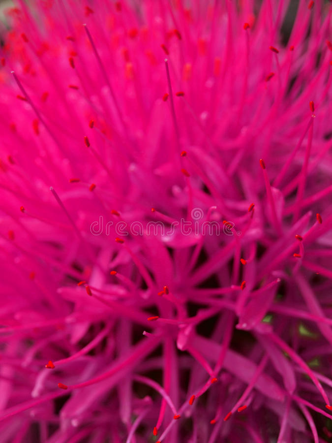 Fleur chaude images stock
