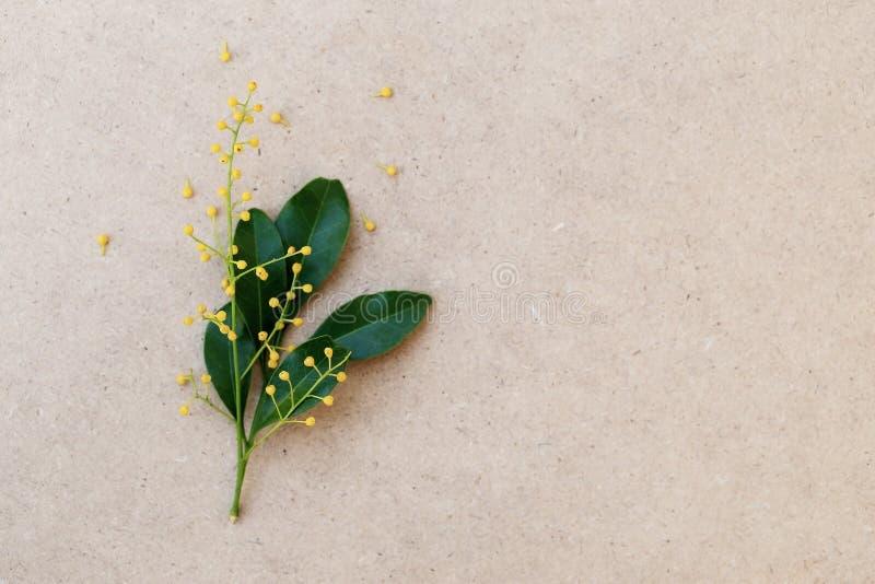 Fleur chinoise jaune de riz et feuille verte sur le papier brun image stock