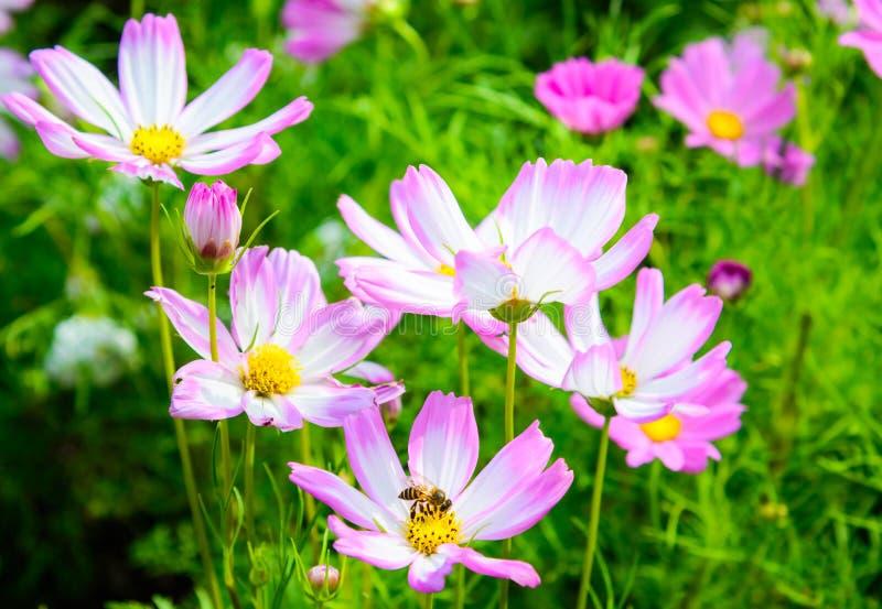 Fleur colorée avec le crochet d'abeille photos libres de droits