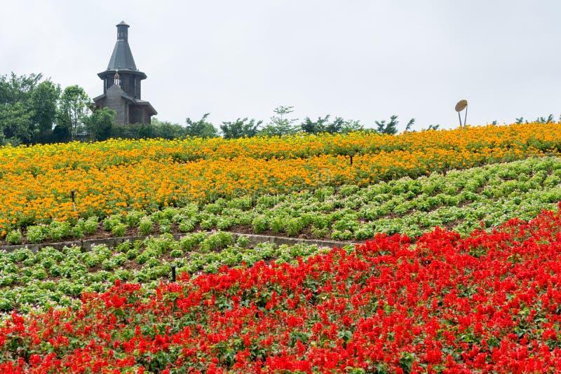 Fleur colorée classée et maison photo stock
