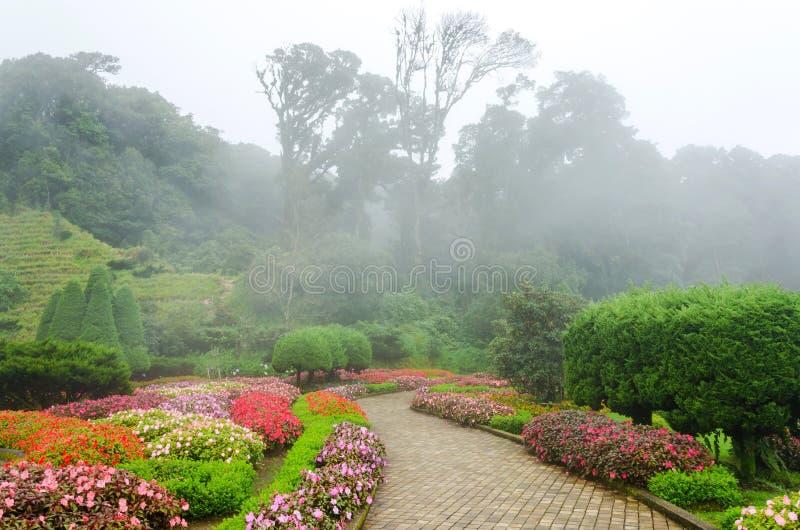 Fleur colorée dans le beau jardin avec le brouillard de pluie image stock