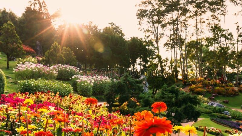 Fleur colorée de fleur de zinnia photographie stock libre de droits
