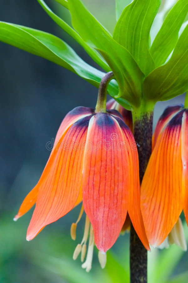 Fleur colorée en fleur images stock