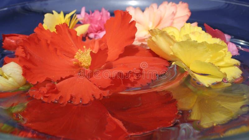 Fleur colorée sur l'eau photo libre de droits