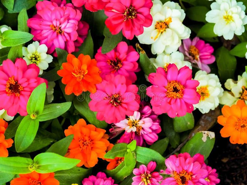 Fleur color?e image stock