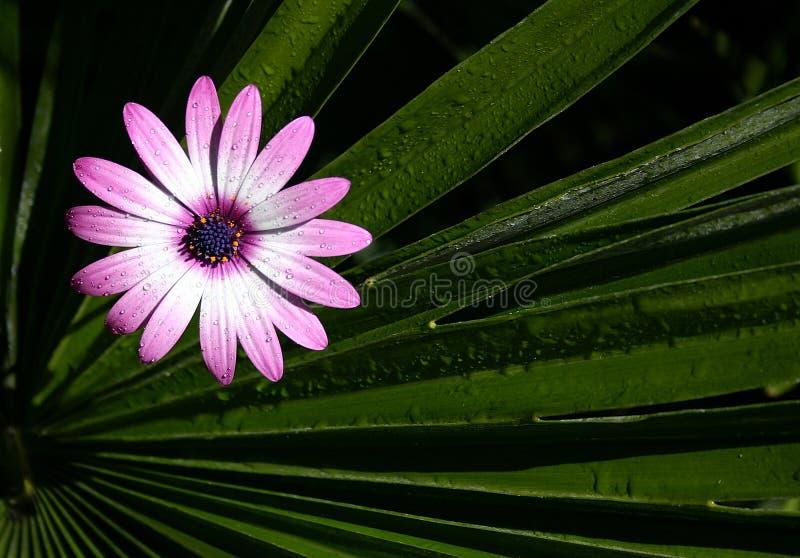 Fleur contre des lames photos stock