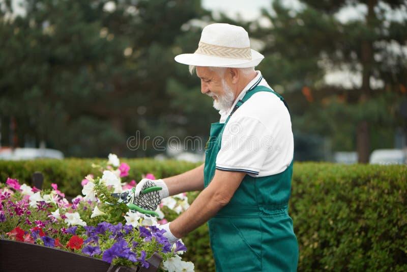 Fleur coupée masculine supérieure de travailleur dans le jardin image libre de droits