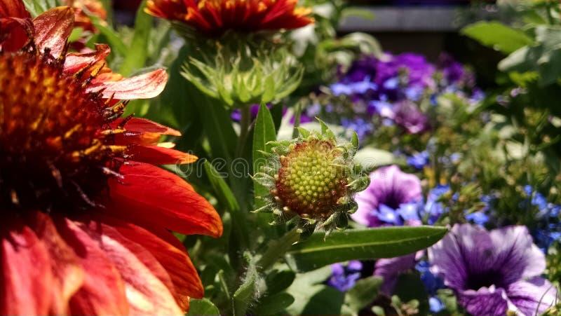 Fleur couvrante photos stock