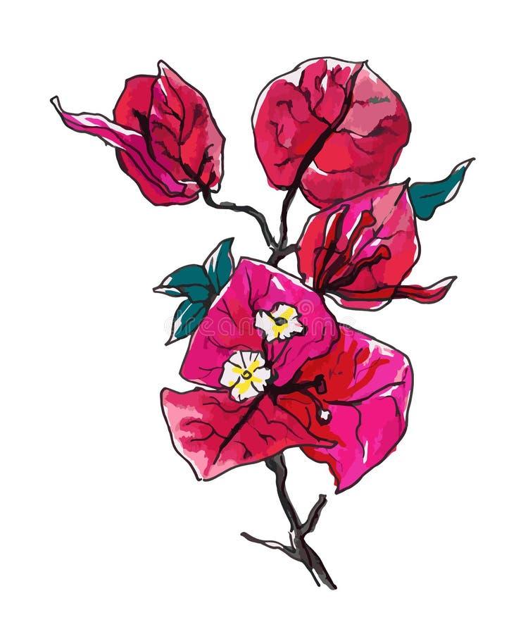 Fleur décorative de bouganvillée illustration de vecteur