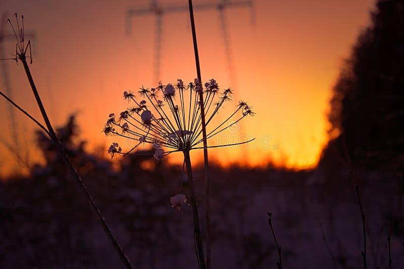 Fleur défraîchie avec le coucher du soleil images stock