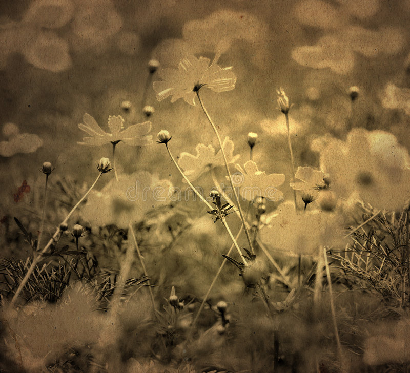 Fleur démodée image libre de droits