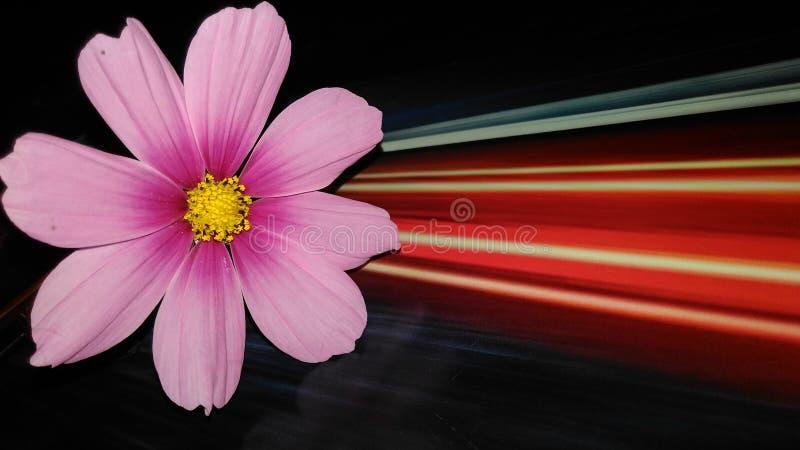 Fleur d'éclairage photo stock