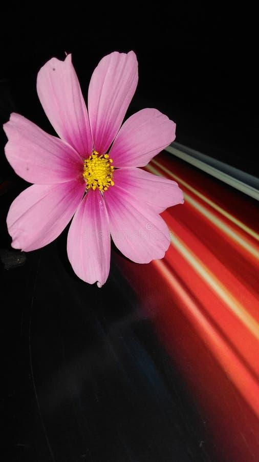 Fleur d'éclairage photo libre de droits