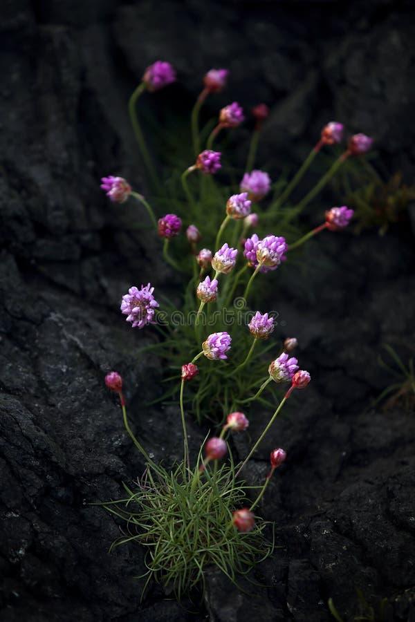 Fleur d'épargne photo stock