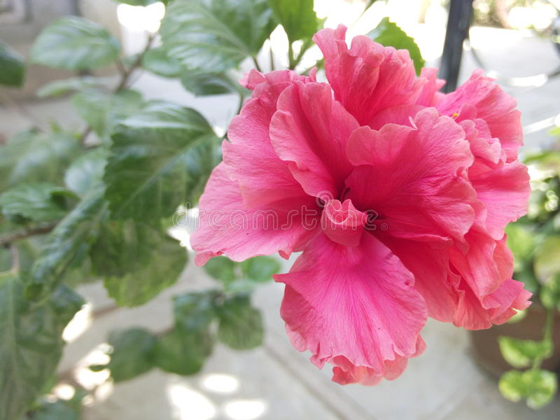 Fleur d'amour image libre de droits