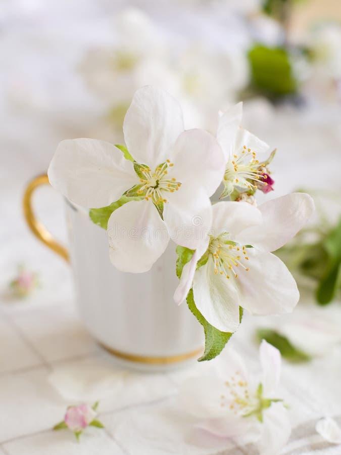 Fleur D Apple Images libres de droits