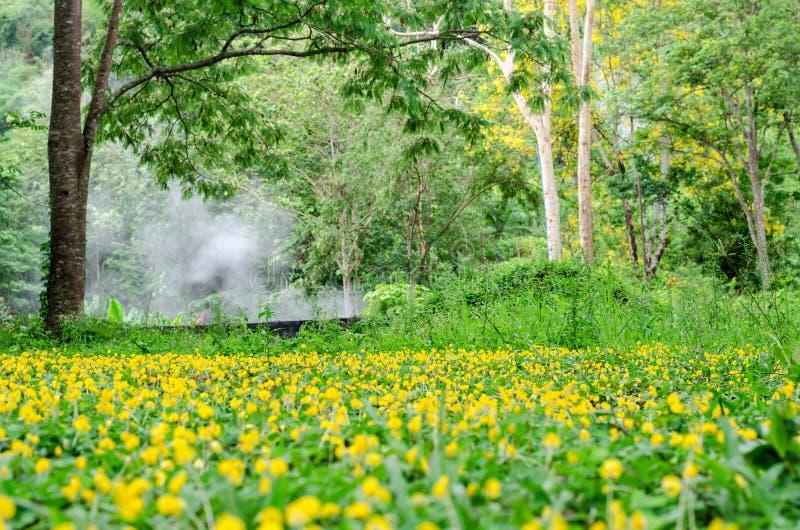 Fleur d'arachide de Pinto dans le jardin photos libres de droits