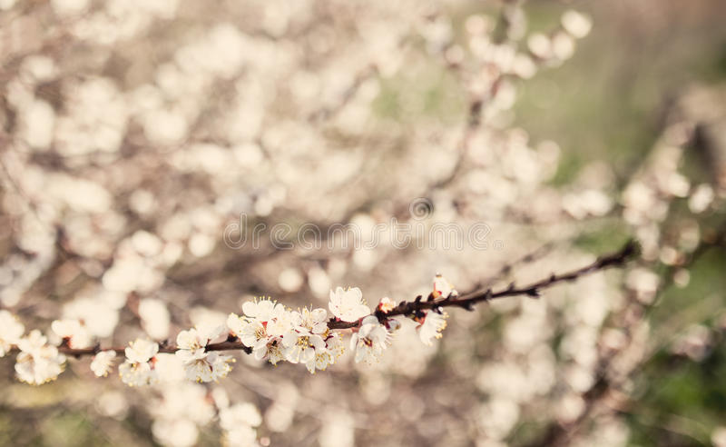Fleur d'arbre de fleur de vintage photo stock