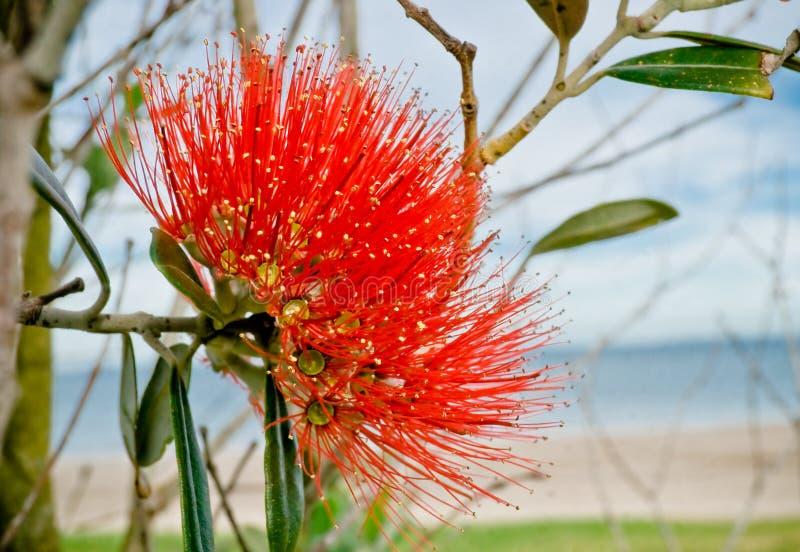 Fleur d'arbre de Noël images libres de droits