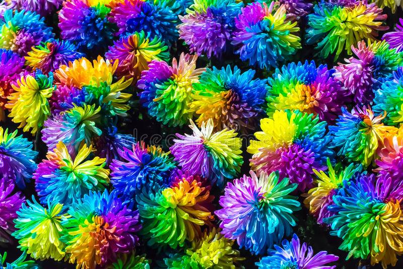 fleur d 39 arc en ciel de chrysanth me image stock image du ciel bleu 52771981. Black Bedroom Furniture Sets. Home Design Ideas