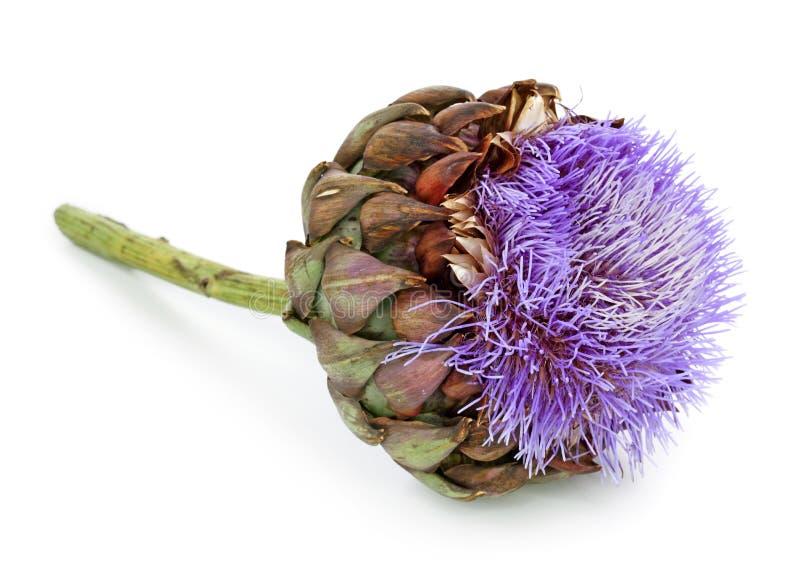 fleur d 39 artichaut image stock image du lilas globe 16049231. Black Bedroom Furniture Sets. Home Design Ideas