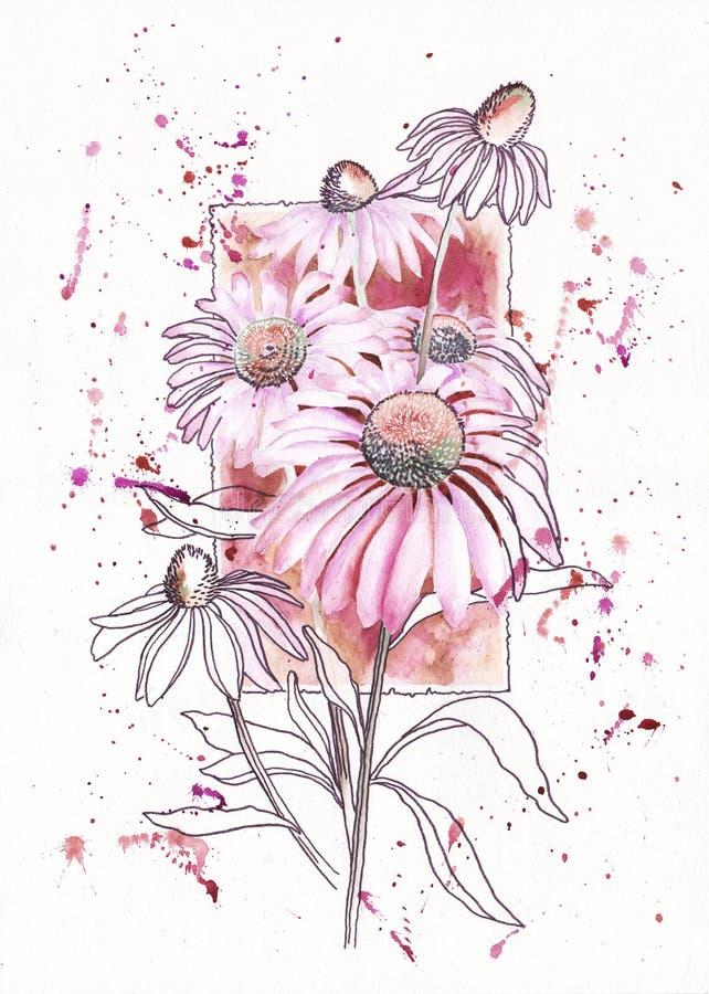 Fleur d'Echinacea sur le fond du cadre illustration stock