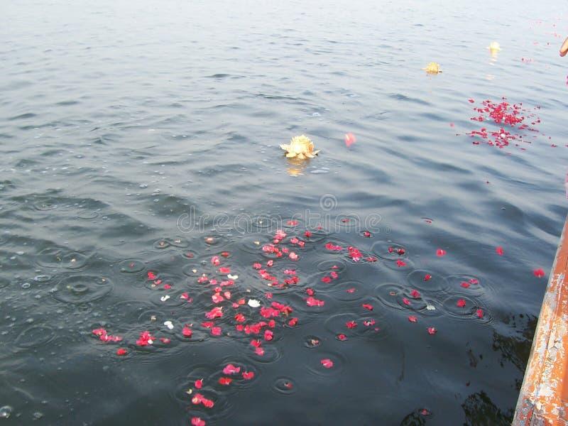 Fleur d'encemencement en mer photo stock