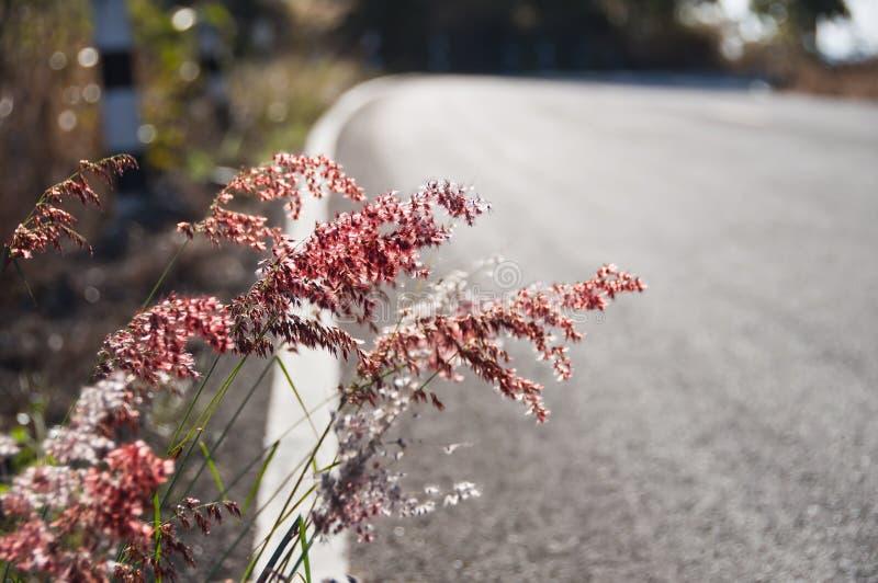 Fleur d'herbe. photographie stock libre de droits