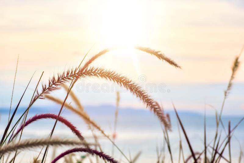 Fleur d'herbe sur la plage image stock