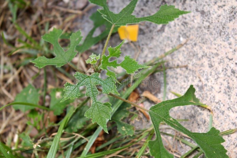 Fleur d'herbe sur la roche image libre de droits
