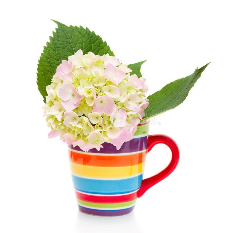 Fleur d'hortensia dans une tasse photos libres de droits