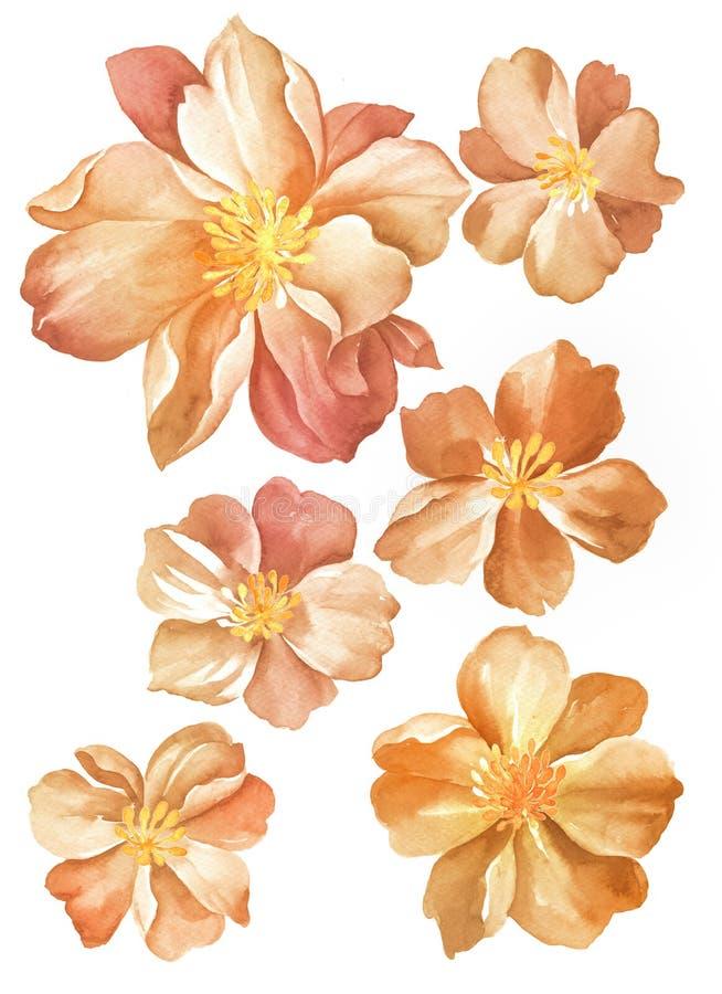 Fleur d'illustration d'aquarelle illustration stock