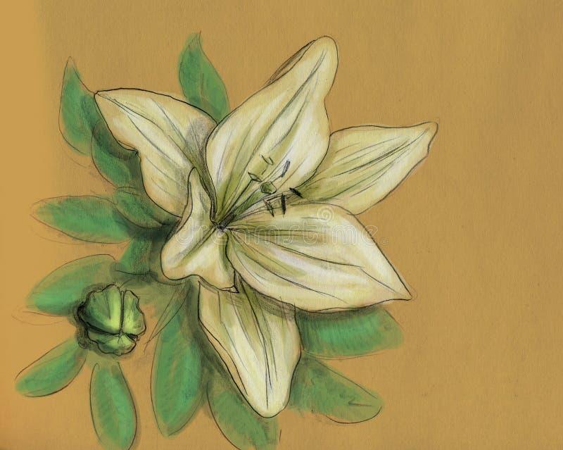 Fleur d'iris - croquis de crayon illustration libre de droits
