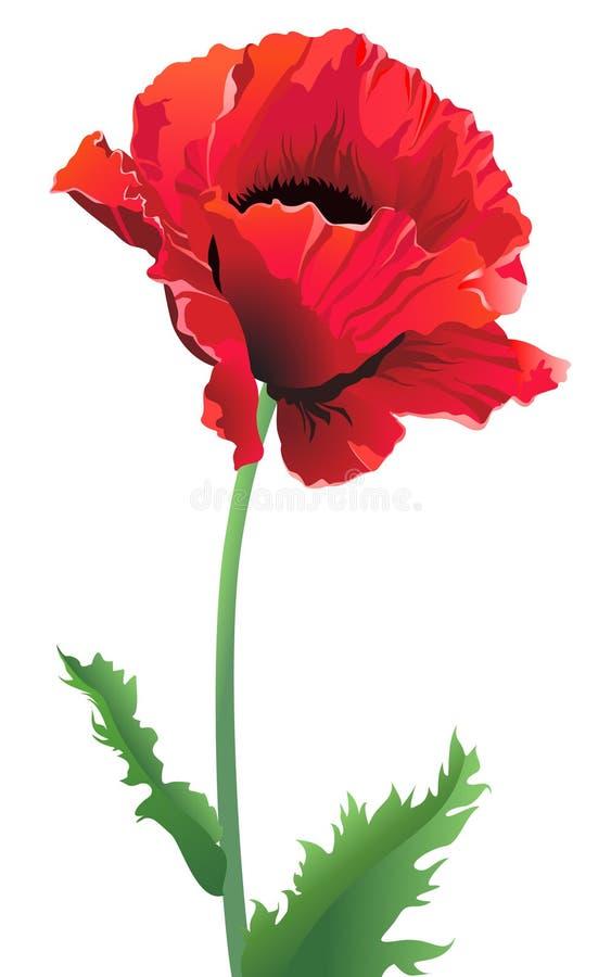 Fleur d'isolement de pavot illustration de vecteur